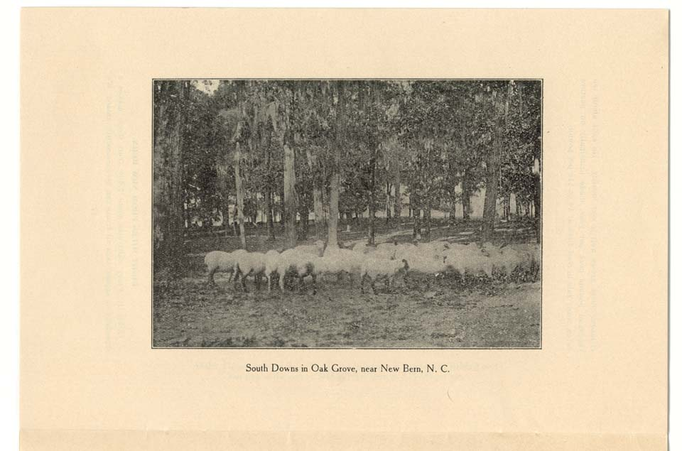 """South Downs in Oak Grove, near New Bern, N.C."""